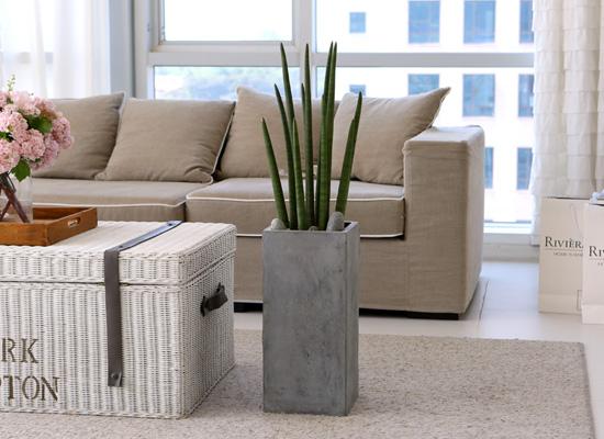 도시 정원 - 실내공기 정화하자 - 식물디자인 심플하고 모던한  스튜키
