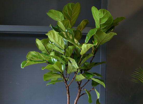 Office & nature 떡갈나무(중)