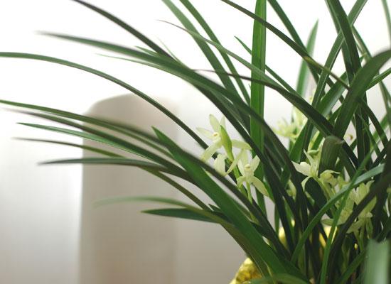 [인사이동 추천] 하얀꽃이 피어나는 향기로운 동양란