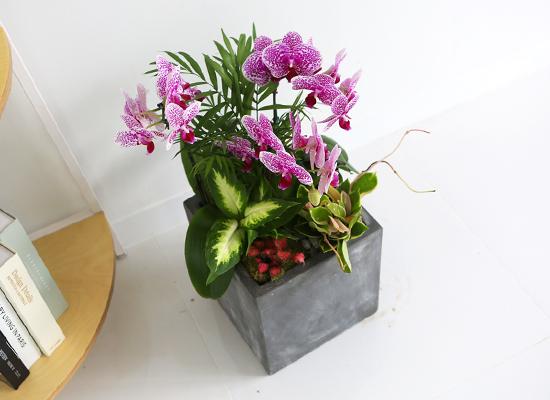 [인사이동추천] Office&Nature - 무늬가아름다운 썬뷰티