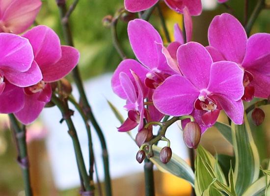 아름다움이 있는 공간 - 화려하고 고급스러운 핑크호접란