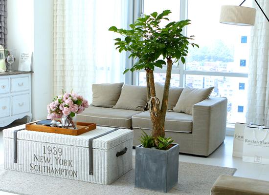 도시 정원 - 실내공기 정화하자 - 행복을 기원하는 행복나무