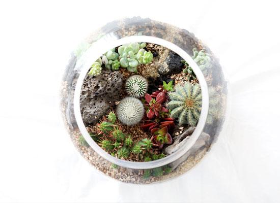 유리병안에 작은 정원을 꾸몄어요 - 다육테라리움 원형대