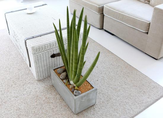 도시 정원 - 실내공기 정화하자 - 공간에 멋스러움을 가득 스튜키대품