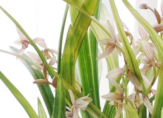 [인사이동 추천] 예쁜 꽃이 피어있는 동양란