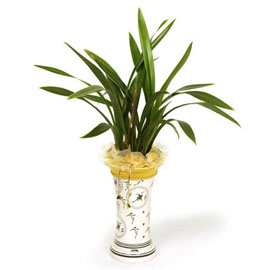 금화산 꽃배달하시려면 이미지를 클릭해주세요