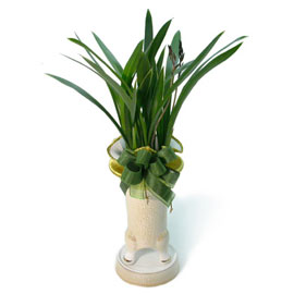 [지금계절에 딱!] 산천보세 꽃배달하시려면 이미지를 클릭해주세요
