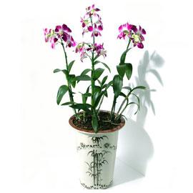 덴파레 꽃배달하시려면 이미지를 클릭해주세요