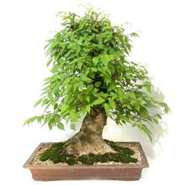 느티나무 꽃배달하시려면 이미지를 클릭해주세요