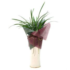동양란 꽃배달하시려면 이미지를 클릭해주세요