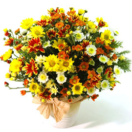 국화꽃향기 꽃배달하시려면 이미지를 클릭해주세요