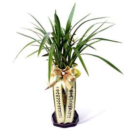 동양란-옥화 꽃배달하시려면 이미지를 클릭해주세요