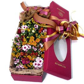 감성플라워-국화향기 가득한 플라워박스 꽃배달하시려면 이미지를 클릭해주세요