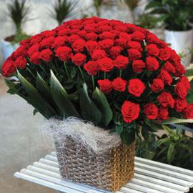 [100]러♥브 - 사랑의 시선 꽃배달하시려면 이미지를 클릭해주세요