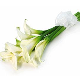 Cala Bouquet 꽃배달하시려면 이미지를 클릭해주세요
