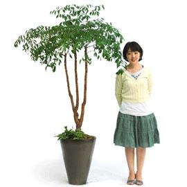 행복을 주는 나무 - happy tree 꽃배달하시려면 이미지를 클릭해주세요