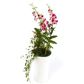덴파레 엘사쿨(소) 꽃배달하시려면 이미지를 클릭해주세요