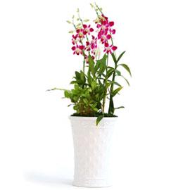 신비한덴파레 엘사쿨 꽃배달하시려면 이미지를 클릭해주세요