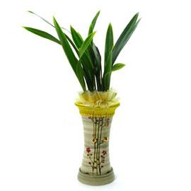 금봉금(고급) 꽃배달하시려면 이미지를 클릭해주세요