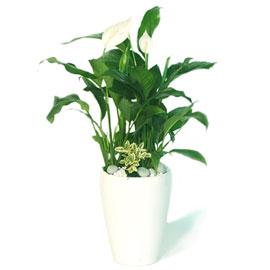 싱그런 스파트필름 꽃배달하시려면 이미지를 클릭해주세요