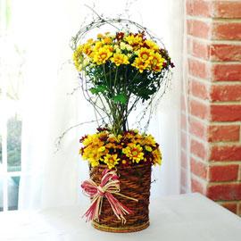 가을이 준 행복 - 청춘 꽃배달하시려면 이미지를 클릭해주세요