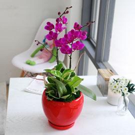 아름다움이 있는 공간-감사합니다 (*화기변경) 꽃배달하시려면 이미지를 클릭해주세요