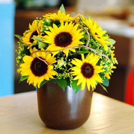 소녀시대 - Sunny 꽃배달하시려면 이미지를 클릭해주세요