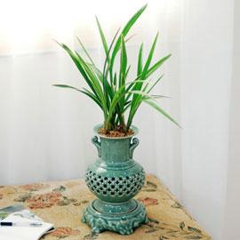 고급 도자기 분의 옥화 꽃배달하시려면 이미지를 클릭해주세요