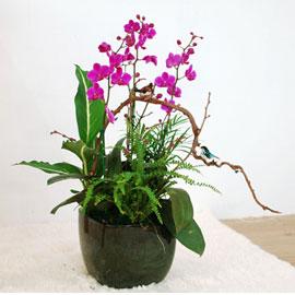 생활공간을 화려하게 - 만천홍(중) 꽃배달하시려면 이미지를 클릭해주세요
