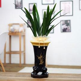 제철추천동양난( 보세 ) 꽃배달하시려면 이미지를 클릭해주세요