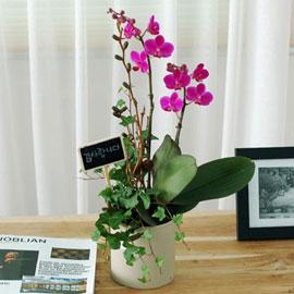 감사의 마음 - 만천홍B 꽃배달하시려면 이미지를 클릭해주세요