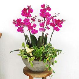 원형화기의 만천홍 [화기변경] 꽃배달하시려면 이미지를 클릭해주세요