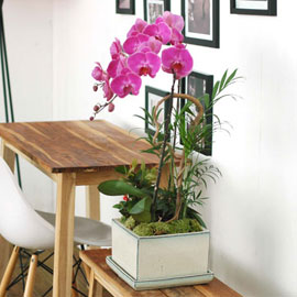 사각화기에 심은 핑크호접 꽃배달하시려면 이미지를 클릭해주세요