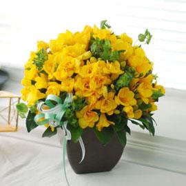 [서울배송]the spring day - 지금 만나러 갑니다 꽃배달하시려면 이미지를 클릭해주세요
