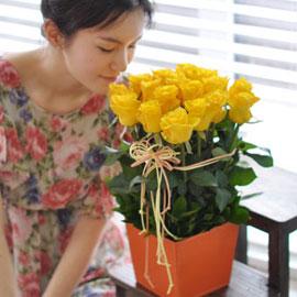 [서울배송]All that rose - Nowdays[**화기가변경됩니다] 꽃배달하시려면 이미지를 클릭해주세요