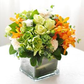 [서울배송] Elegant noble- Dr. jackie(화기 품절시 변경될 수 있음) 꽃배달하시려면 이미지를 클릭해주세요