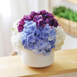 [서울배송] Elegant noble II -Love Lines(화기 품절시 변경될 수 있음) 꽃배달하시려면 이미지를 클릭해주세요