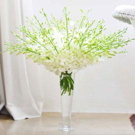 [서울배송] Retro Mono - Serenade 꽃배달하시려면 이미지를 클릭해주세요