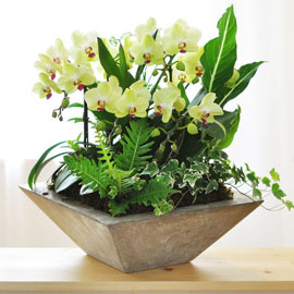 자연이 가득한 공간! - 포춘(화기품절시 변경됨) 꽃배달하시려면 이미지를 클릭해주세요
