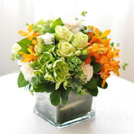 [서울배송]Elegant noble- Dr. jackie(화기 품절시 변경될 수 있음) 꽃배달하시려면 이미지를 클릭해주세요