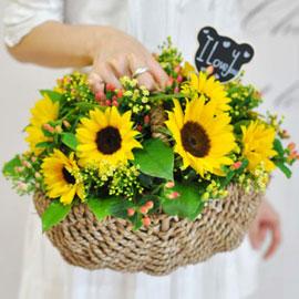Lovely lover -Sunshine love 꽃배달하시려면 이미지를 클릭해주세요
