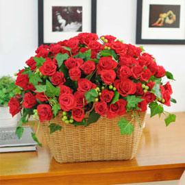 [서울배송] [100]The Roses Bloom - 사랑을 그대 품안에 꽃배달하시려면 이미지를 클릭해주세요