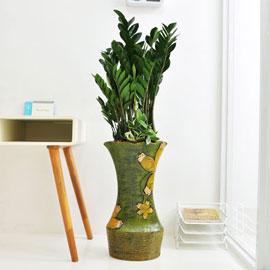 강력추천 개업선물 - 싱그러운 금전수F 꽃배달하시려면 이미지를 클릭해주세요
