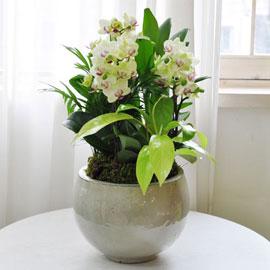 정성을 담아 - 테라코타화기에 심은 노랑미니호접 꽃배달하시려면 이미지를 클릭해주세요