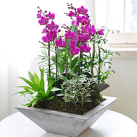 정성을 담아 - 사각화기에 심은 만천홍 꽃배달하시려면 이미지를 클릭해주세요