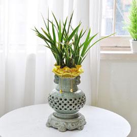[인사이동 추천] 꽃보다 잎이 예쁜 고급 동양란 꽃배달하시려면 이미지를 클릭해주세요