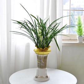 [인사이동 추천] 하얀꽃이 피어나는 향기로운 동양란 꽃배달하시려면 이미지를 클릭해주세요