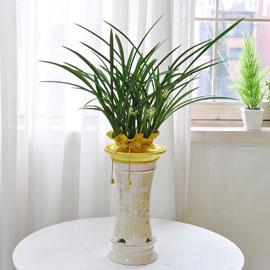 [인사이동 추천] 하얀꽃이 피어나는 고급 동양란 꽃배달하시려면 이미지를 클릭해주세요