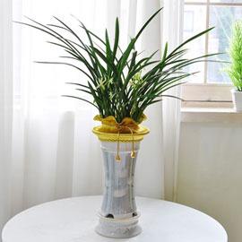 [인사이동 추천] 하얀 꽃이 피어나는 동양란(***화기품절로 화기변경***) 꽃배달하시려면 이미지를 클릭해주세요