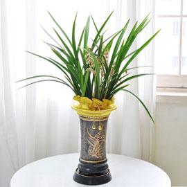 [인사이동 추천] 꽃이 풍성하게 피어있는 고급 동양란 꽃배달하시려면 이미지를 클릭해주세요